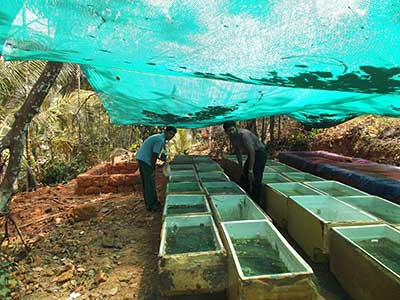 Low investment freshwater ornamental fish culture